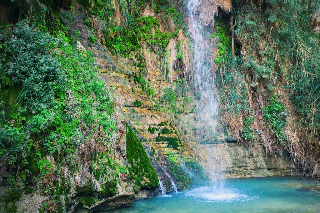 Ein gedi oasis